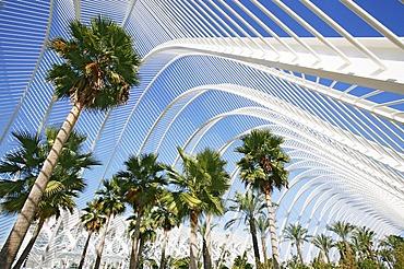 Architectural arch construction with palm trees in the Ciudad de las Artes y las Ciencias, City of Arts and Sciences, Valencia, Spain, Europe