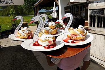 Cream puffs served at Windbeutelgraefin Cafe, Ruhpolding, Chiemgau, Bavaria, Germany, Europe