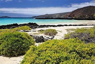 Beach with green bushes, small waves and an island on the horizon, Punta Cormorant, Floreana Island, Galapagos Archipelago, Ecuador, South America, Pacific Ocean