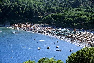 Pine forest and beach, Fetovaia, Island of Elba, province of Livorno, Tuscany, Italy, Europe