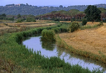 Spergolaia, marshes in the Maremma Nature Park near Alberese, Province of Grosseto, Tuscany, Italy, Europe