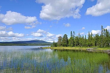 Lake landscape near Oestersund, Sweden, Scandinavia, Europe