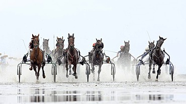 Trotting race, Duhner Wattrennen, Duhnen Trotting Races 2008, the only horse race in the world on the sea bed, Cuxhaven, Lower Saxony, Germany, Europe