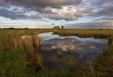 Small pond, atmospheric clouds, Wuemmewiesen Nature Reserve, Bremen, Germany, Europe