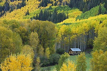Log cabin, aspen trees and cottonwoods in fall colors, Dolores, San Juan National Forest, Colorado, USA