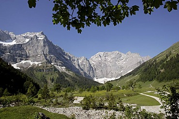 View from the Engalm alpine pasture of a Sycamore (Acer pseudoplatanus) in the Grosser Ahornboden, Karwendel Range in Eng, Tyrol, Austria, Europe