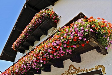 Traditional house with balconies adorned with an abundance of Geraniums (Pelargonium zonale) near Munich, Bavaria, Germany, Europe