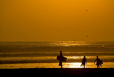 Sunset with sea gulls and three surfers at the beach from Arica, Pacific, North of Chile, South America