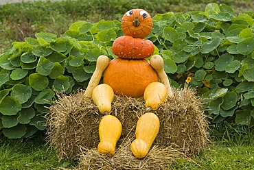 Figure made of Pumpkins (Cucurbita), Upper austria, Europe