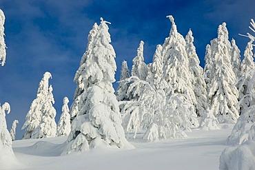 Winter landscape at Almkogel Mountain, Kalkalpen National Park, Upper Austria, Austria, Europe