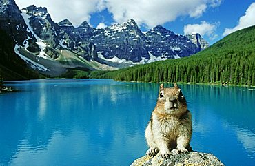 Gopher in front of Moraine Lake in Banff National Park, Alberta, Canada, North America
