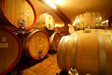 Wine cellar, Cantina di Vino, Zeni, Bardolino, Italy, Europe
