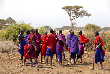 Masai men dressed in colourful capes are standing together in the savannah Amboseli National Park Kenya
