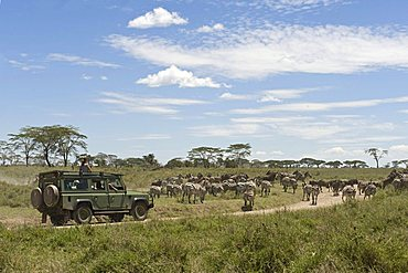 Visitors on safari in an all-terrain vehicle watching the Zebra migration at Seronera in Serengeti, Tanzania, Africa