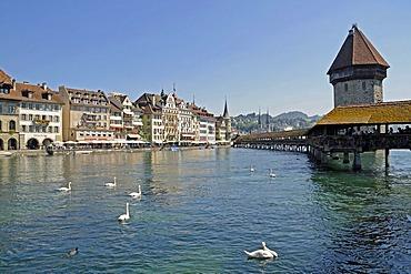 Swans, Kapellbruecke, Chapel Bridge, water tower, Reuss River, historic district, Switzerland, Europe