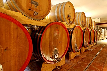 Cantina wine cellar Ascheri in Bra Piedmont Italy