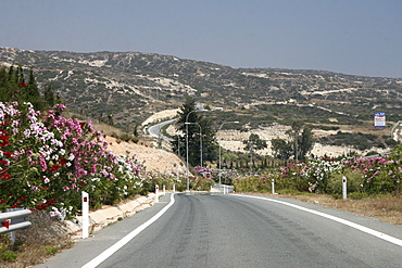 Highway with Oleander (Nerium oleander) on Cyprus, driving on the left