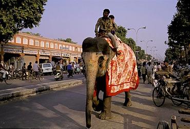 Street scene with elephant, two riding boys on an elephant, Jaipur, Rajasthan, India