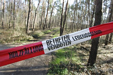 Road closed off due to logging activity, Mannheim, Baden-Wuerttemberg, Germany, Europe