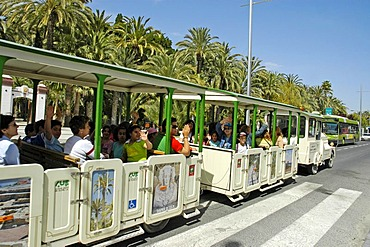 Tourist in an open slow train on a sight-seeing tour, palm grove, Elx, Elche, Costa Blanca, Spain