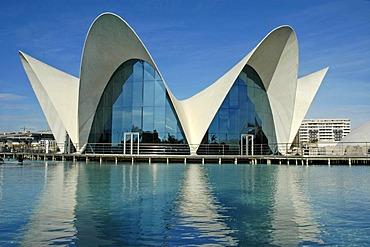 Aquarium, L`Oceanografic, City of arts and sciences, Ciudad de las Artes y las Ciencias, Valencia, Spain