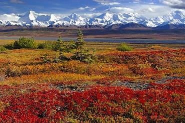 Autumn in Denali Nationalpark Alaska USA