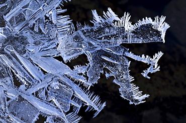 Ice crystals, Schwaebische Alp, Baden-Wuerttemberg, Germany, Europe