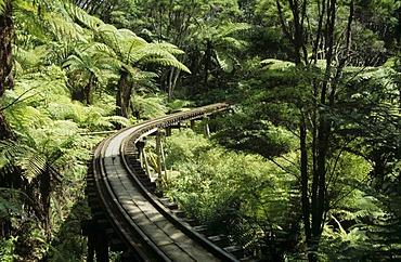 Fern trees and a trestle bridge of the Driving Creek Railway a narrow gauge railway leading through a rainforest Coromandel peninsula New Zealand
