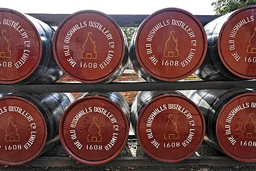 Barrels at the Bushmills Whiskey Distillery, Bushmills, Londonderry, North Ireland