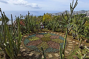 Cacti in the botanical garden, Funchal, Madeira, Portugal