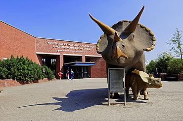Triceratops dinosaur sculptures in front of the Natural History Museum in Muenster, North Rhine-Westphalia, Germany, Europe