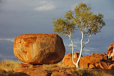 Gum tree and rock, Devil's Marbles (Karlu Karlu), Northern Territory, Australia