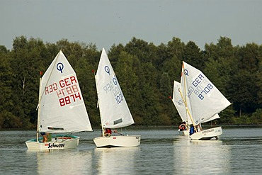 Optimist Dinghy Race, Lake Driland, Gronau, Munsterland, Germany