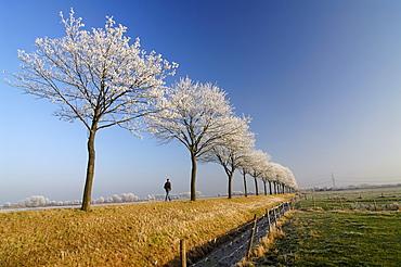 Winter landscape in Vier- und Marschlande, Hamburg, Germany