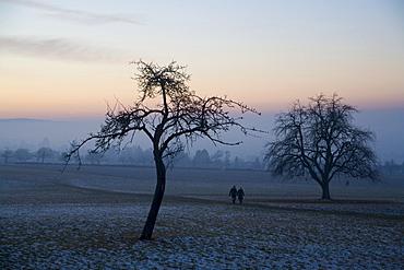 Wintertime walk, sunset, Straubenhardt-Schwann, Enzkreis, Baden Wuerttemberg, Germany, Europe