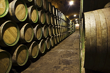 Wine barrels in a wine cellar in La Rioja, Spain