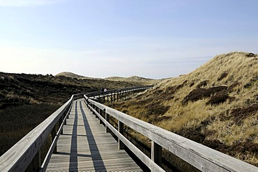 Wooden path at Wenningstedt, Sylt Island, North Frisian Islands, Schleswig-Holstein, Germany, Europe