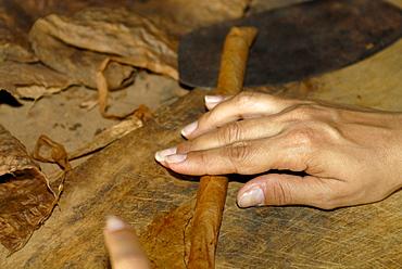 Cigar-rolling, Pinar del Rio, Cuba, Caribbean, Americas