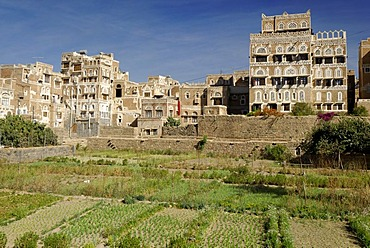 Gardens in front of ornamental houses in the historic city centre of Sanaa, Sana¥a, UNESCO World Heritage Site, Wadi Hadramaut, Yemen, Arabia, Arab peninsula, the Middle East