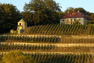Vineyard mansion river Elbe waterside Dresden Saxony Germany