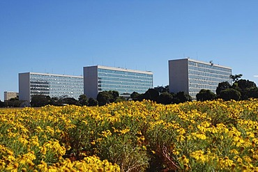 Ministries behind yellow flowers in Brasilia, Brazil