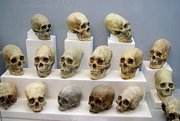 Deformed skulls, discovered in the Tihuanaku temples, Bolivia