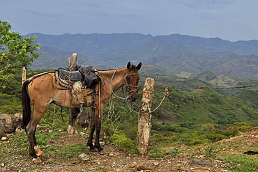 Horse, mountainous region, Esteli, Nicaragua, Central America