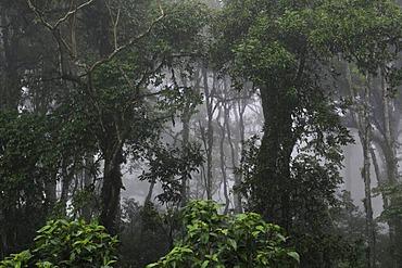 Tropical cloud forest, Miraflor-Moropotente Nature Reserve, Nicaragua, Central America