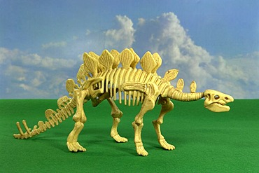 The Stegosaurus is called also plate lizard and in the jurassic period occurred. Its length amounted to approx. 8 m, the height of approx. 2.75 m and it had a mass of approx. 3 tons. It had a whale-nut-large brain and bone plates at the back. The Stegosau