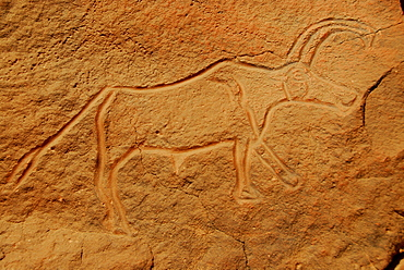 Rock engraving of an ox, Wadi Mathendusch, Libya