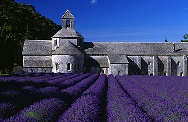 Lavender fields in front of Abbaye Senanque, Gordes, France
