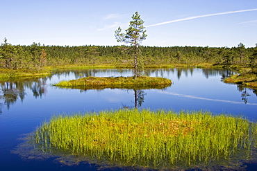 Viru Raba, marsh landscape in Lahemaa National Park, Estonia, Europe