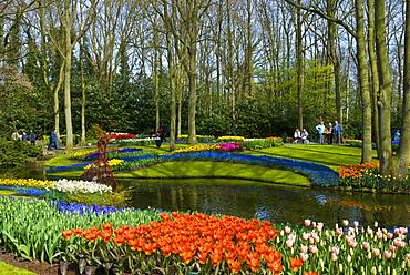 Flower garden, Keukenhof, Holland, Niederlande, Europa
