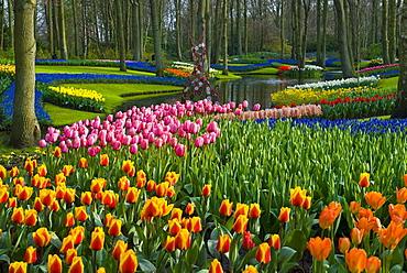 Tulips (Tulipa), Keukenhof Gardens, Holland, the Netherlands, Europe